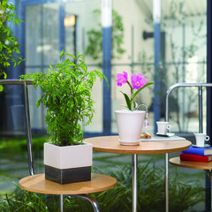 インテリア/スタイリッシュ/おしゃれ/モダン/クラシカル 紅白の梅盆栽を上品な白の陶器に合わせまし…