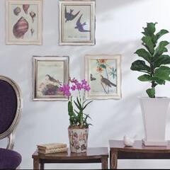 インテリア/オーセンティック/おしゃれ/かわいい/クラシカル かわいいミニ盆栽の3点セット。和傘のフィ…