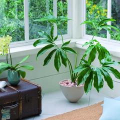 シンプル/スタイリッシュ/クール/モダン/マイナスイオン オフィスを快適に。すっきりとしたシンプル…
