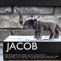 リミアな暮らし/海外インテリア/フォロー大歓迎/Instagram @maaco.uw/キャンドゥ/ダイソー/... だいぶ前にダイソーで買った動物の置き物♫…