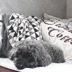 ありがとう平成/LIMIAペット同好会/わんこ同好会/至福のひととき/LIMIAインテリア部/雑貨/... 私の部屋で寝るのが好きなうちの子。 昼寝…(1枚目)
