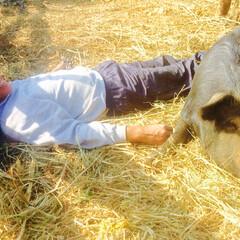 保護牧場/黒豚/アグー ファームの動物たちは毎日がHappy D…