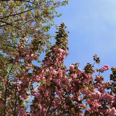 春のフォト投稿キャンペーン 春の終わり🌸🌿
