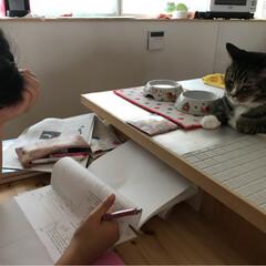 うちの猫/愛猫 娘の宿題を見張っているリオン(✿˘艸˘✿…