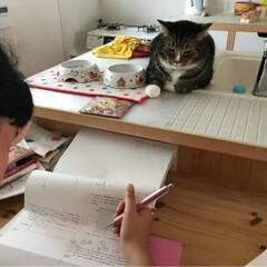 うちの猫/愛猫 娘の宿題を見張っているリオン(✿˘艸˘✿…(2枚目)