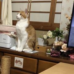 姿勢良く/見つめる猫/LIMIAペット同好会/男前/キリリ/癒される/... お行儀よく何を見つめているのか?と思って…