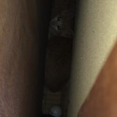 白と茶の子猫/可愛い/親からはぐれた子猫/子猫/LIMIAペット同好会/にゃんこ同好会 家のそばで子猫の鳴き声がするので、水とエ…