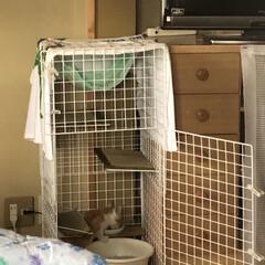 白と茶の子猫/子猫/可愛い/猫派/LIMIAペット同好会/にゃんこ同好会/... 保護して1週間以上になりますが、まだ微妙…
