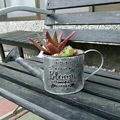 寄せ植え 大好きな多肉植物。植える鉢で随分印象がか…