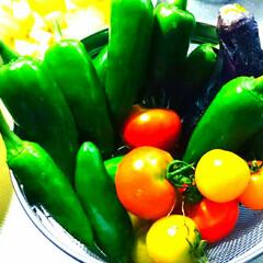 庭の野菜 ようやくの収穫❗❗⤴⤴トマトはなかなか色…