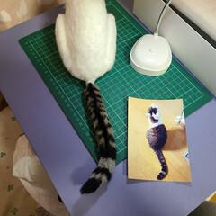 羊毛フェルト猫/羊毛フェルト/ニャンコ同好会/くうたの思い出/思い出のアルバム こんばんは〜🌃  くうちゃん3号やっとし…(1枚目)