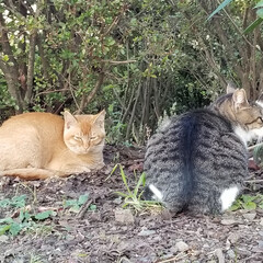 お散歩/鹿の沼/にゃんこ同好会/猫/地域猫 こんにちは☀  何日か前ですが…  仕事…
