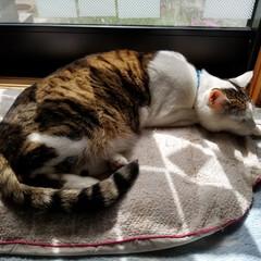 LIMIAペット同好会/ペット/猫/にゃんこ同好会 おはようございます☀  朝から甘噛み、引…(2枚目)