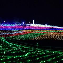 ペット/ペット仲間募集/猫/にゃんこ同好会/クリスマス/おうちごはん/... 近くにある太田北部運動公園で やっている…
