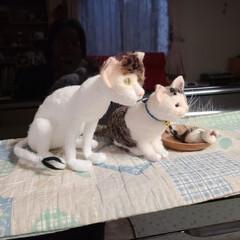 タコライス/今日のランチ/羊毛フェルト猫/にゃんこ同好会/ハンドメイド/手作り/... こんばんは🌇  今日は日頃のお仕事で手に…(2枚目)