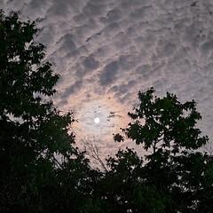 スマホカメラ/夜空/田舎の風景/ニャンコ同好会 こんばんは🌃  今日の田舎の風景です  …(1枚目)