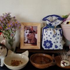 薄紫色のお花の名前は?/羊毛フェルト/にゃんこ同好会/ねこ/猫 こんにちは☀  今日は秋晴れのいいお天気…(1枚目)