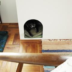 ドッグルーム/犬小屋/ペット リビングの脇にドッグルームを配置