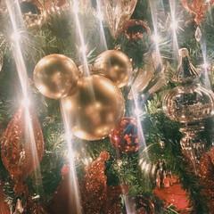 お出かけ/ディズニー/ミッキー/クリスマスツリー/クリスマス クリスマスを感じてきました🎄 この時期の…