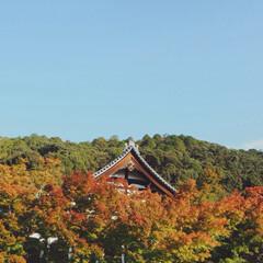 日帰り/日帰りで京都/紅葉/京都/旅行/秋/... 日帰りで京都に行ってきました⛩  紅葉が…