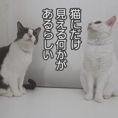猫あるある 猫あるある。