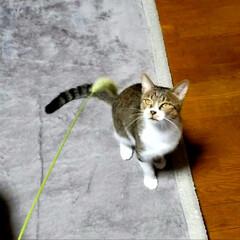 初めての猫じゃらし/にゃんこ成長記録/にゃんこ3兄妹/仲良しにゃんこ🐱/にゃんこ大好き❤️/LIMIAファンクラブ/... 生まれて初めての猫じゃらし🌿 めっちゃ夢…(1枚目)