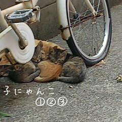 にゃんこ同好会 近所で仔猫発見❗️ 三兄弟❗️親猫は奥に…