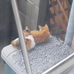 野良猫ちゃん カーテン開けると、今朝もいました❗️野良…