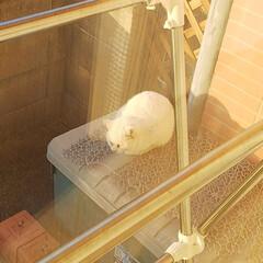 野良猫ちゃん カーテン開けると、野良猫ちゃんが猫よけを…