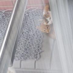 野良猫ちゃん 今朝、カーテンを開けると野良の子猫ちゃん…(1枚目)