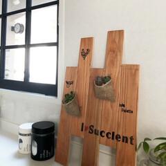 室内窓/内窓/キッチン/多肉植物/グリーンのある暮らし/雑貨/...