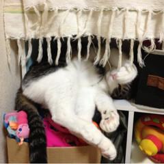 フォロー大歓迎/ペット仲間募集/猫 可愛い、可愛い、可愛い🐈❗️
