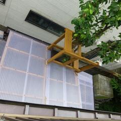 庭木の手入れ/カーポートの改造/狭い土地の有効活用 屋根を延長するにあたって課題だった庭木の…