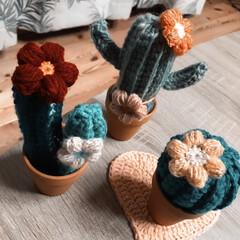 ぷっくりお花/編み物/毛糸/サボテン 最近編み編みしたサボテン🌵 編み物🧶楽し…(3枚目)