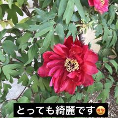 お花のある生活/ガチャる/下駄箱ペンキ塗り/ただ今リノベ中/観葉植物のある暮らし/わんこのいる生活/... 今日は、下駄箱のリノベしました🤔  木目…