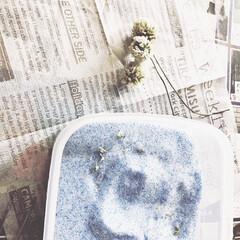 ナイスアイデア/シリカゲル/ドライフラワー/缶リメイク/簡単/雑貨/... homestay中にお家🏠のお花とわんこ…(2枚目)