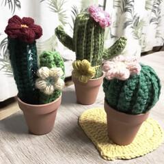 ぷっくりお花/編み物/毛糸/サボテン 最近編み編みしたサボテン🌵 編み物🧶楽し…(2枚目)