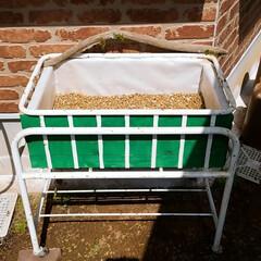 多肉ちゃん寄せ植え/多肉ちゃんのベッド作り/多肉ちゃん/GW/DIY/わたしの手作り 多肉ちゃんのベッドを作ってみました。そし…(3枚目)