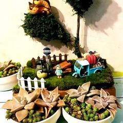 ジオラマ大好き/多肉初心者/ジブリ好き/DIY/雑貨 前に作ったトトロのジオラマに多肉ちゃんと…