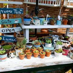 花植え/多肉ちゃん/緑のある暮らし/ガーデニング/庭のお手入れ/4月の天気のいい日曜日 やっと春らしい季節になったので、庭のお手…