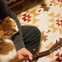 ねこ好き/甘えん坊将軍/きなこ/ペット/猫/にゃんこ同好会/... 久しぶりにギター練習してたら、すぐさま膝…