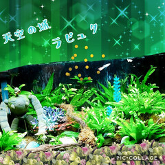 ラピュタ/水槽インテリア/フォロー大歓迎/風景/インテリア/雑貨/... 水槽の緑も増えてきたなぁ…(#^.^#)…