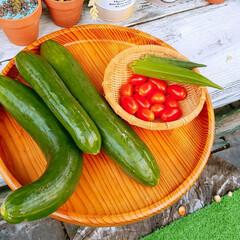 家庭菜園/住まい おはようございます🎵 巨大きゅうり収穫し…