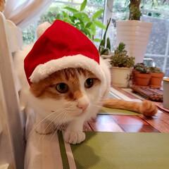 雑貨のある暮らし/多肉大好きおじさん/緑のある暮らし/ジブリのある暮らし/おうち/2018/... 皆さん良いクリスマスをお過ごしください🎄…(6枚目)