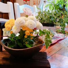 生け花/住まい 今の時期にめっちゃ咲く‼️なんやろ? 菊…