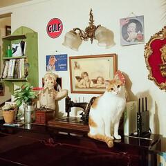 猫/きなこ/ペット/住まい 高い所が好きですなぁ~😸 あなたの後をコ…