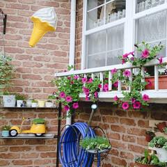 多肉畑/庭づくり/多肉のある暮らし/花のある暮らし/令和元年フォト投稿キャンペーン/令和の一枚/... 窓のプランターに植えたサファニア😊💚いい…