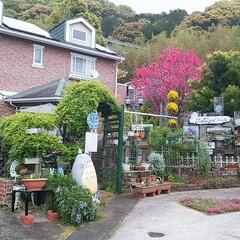 気持ちいい朝/もっこう薔薇もうすぐ😊/ジブリのある暮らし/緑のある暮らし/おうち自慢 気持ち朝です😊🏡🎶🐤🐤🎶 庭のアーチのも…