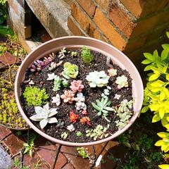 花植え/多肉ちゃん/緑のある暮らし/ガーデニング/庭のお手入れ/4月の天気のいい日曜日 やっと春らしい季節になったので、庭のお手…(2枚目)