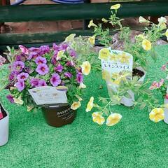 園芸/田舎暮らし/ガーデニング/花男子/グリーン/住まい 新たな仲間が増えました。😊🌺🌱🌈 植える…